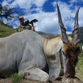 900kg Eland