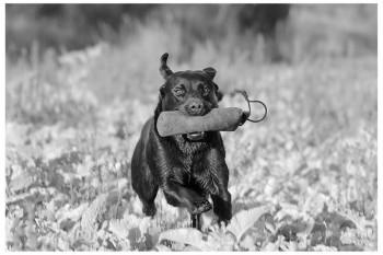 Börja jaga i Sverige med din hund