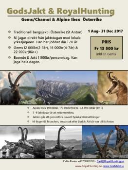 Gems Alpine Ibex